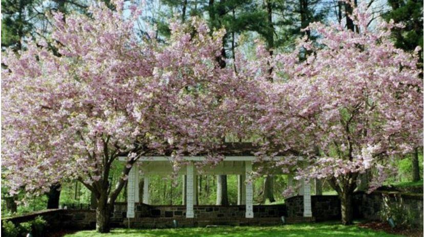 Gyönyörködj a tavasz színeiben 2