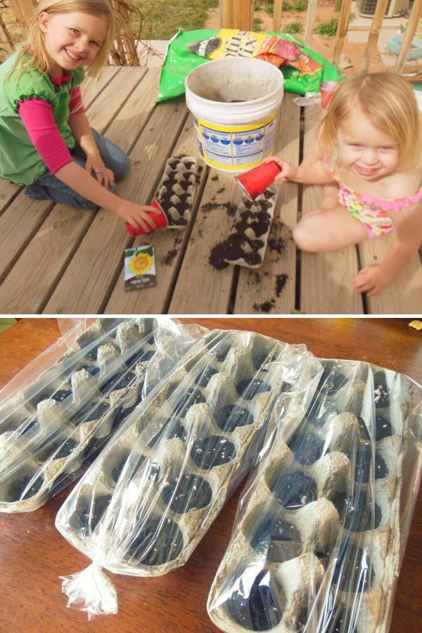 Töltsünk meg néhány tojástartót virágfölddel, ültessünk bele magokat , majd fedjük le a tartályokat műanyag zacskóval. Íme kész is a mini üvegház