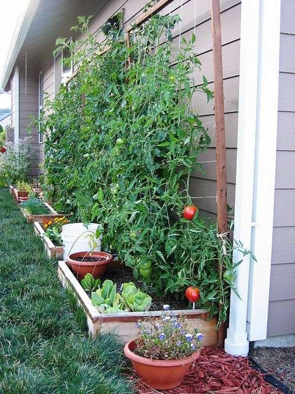 10. Hozz létre egy mini növényes kertet az alapfal mentén