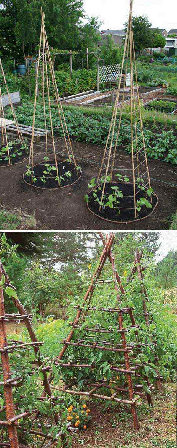 6. Építs egy indián sátorhoz hasonló struktúrát a borsónak, hogy ezzel megkönnyítsd a betakarítást, és a karbantartást