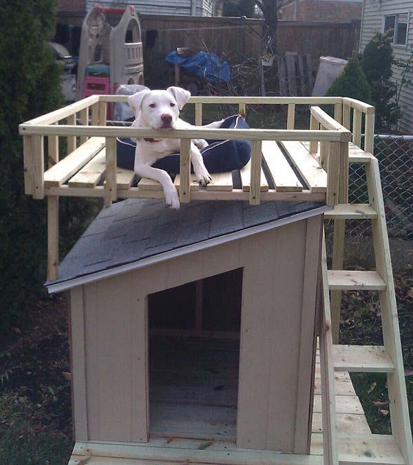 Kutyaházra tetőtéri pihenő