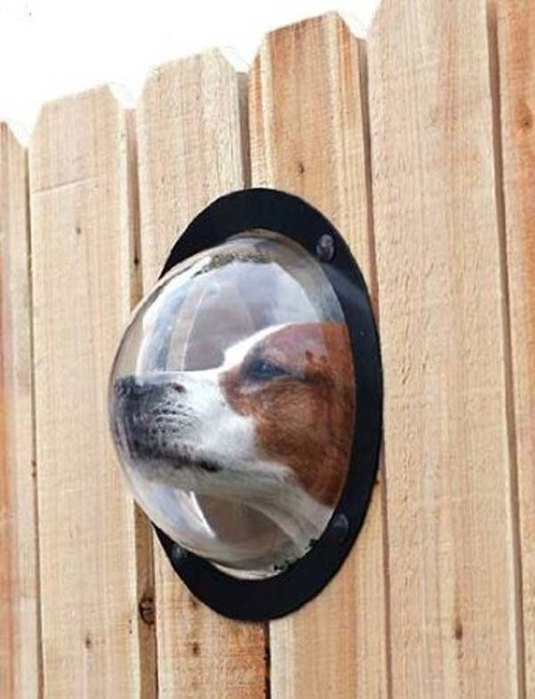 Kutyakukucskáló