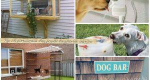 Top 20 fantasztikus DIY projekt háziállatok számára