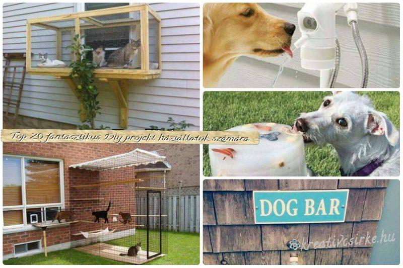 Top 20 fantasztikus DIY projekt háziállatok számára 2