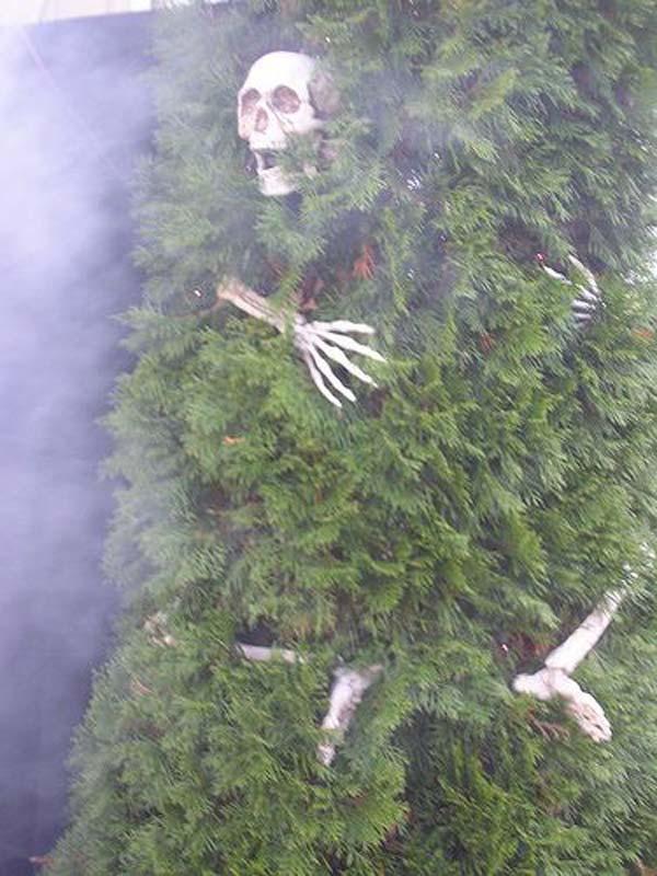 1. Csontváz a fába burkolódzva