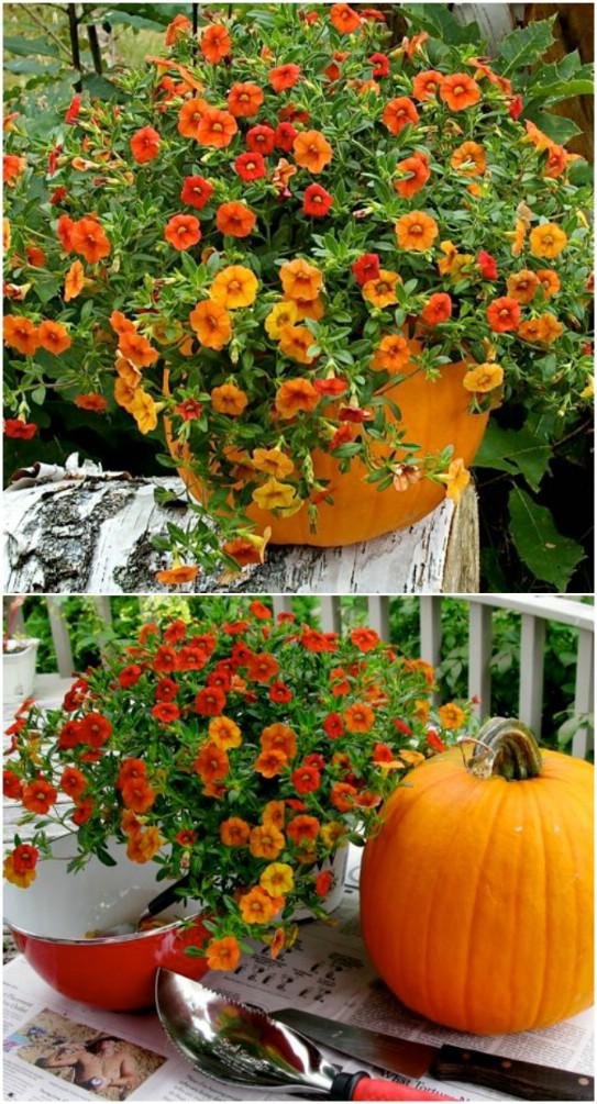 10. Virágcserép valódi tökből
